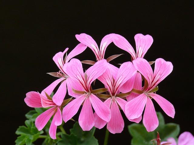 Bild eines Mauerblümchens